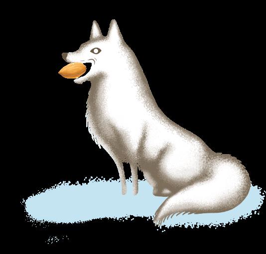 foxwalmond
